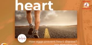 Eggs Prevent Heart Disease